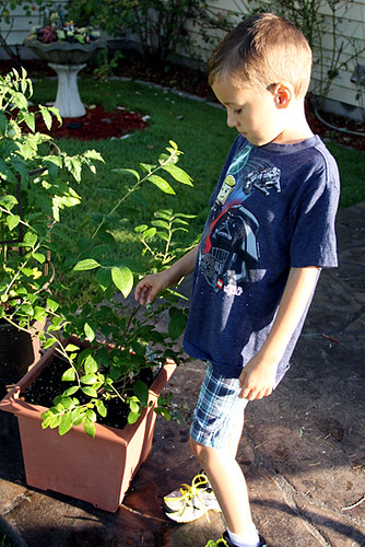 Nathan-looking-at-blueberry-bush