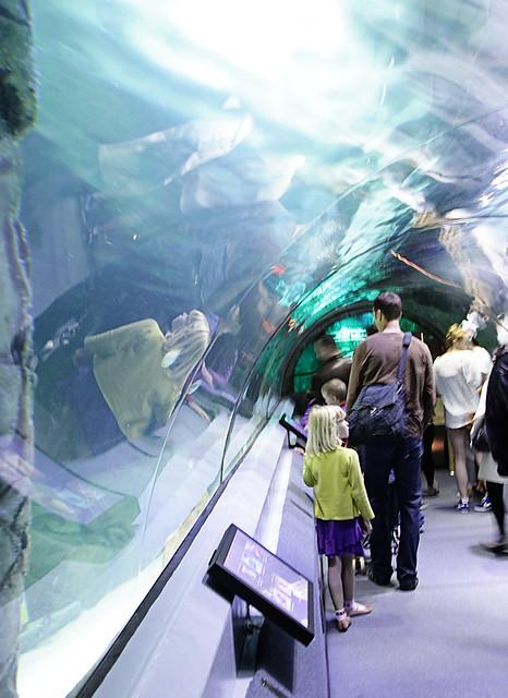 UnderwaterWorldTunnel