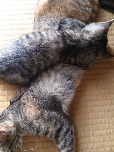 2013-07-06 12.54.44 by Chinobu