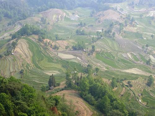 Yunnan13-Yuanyang 23-Laohuzui (13)