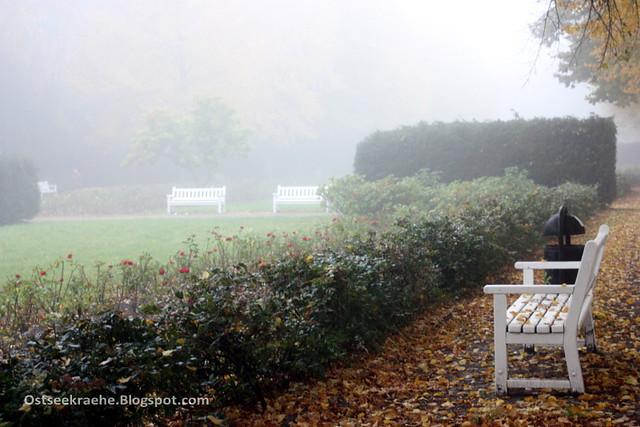 Rostocker Rosengarten im Herbst