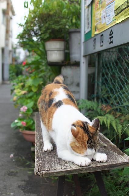 東京路地裏散歩 谷中にて 2013年10月6日