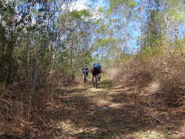 Dayboro Rd Horse Trail