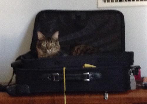 Finnegan is a Helper Cat
