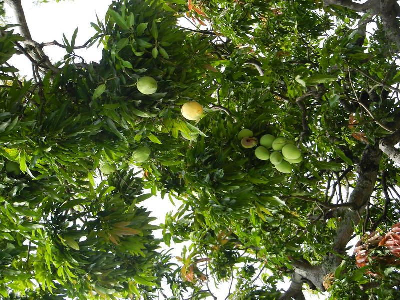 Шри Ланка, растительность