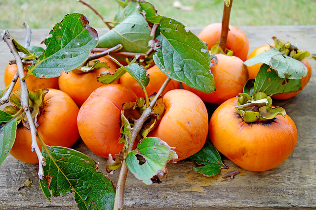 Photo:Fruits of Persimmon By Dakiny