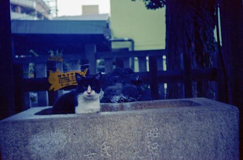 2009年夏 - 神社の猫