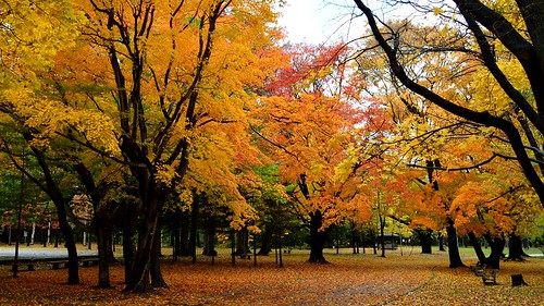 autumn japan sapporo nikon hokkaido fallfoliage 北海道 紅葉 nikkor 札幌 coloredleaves maruyamapark 円山公園 札幌市 d7100