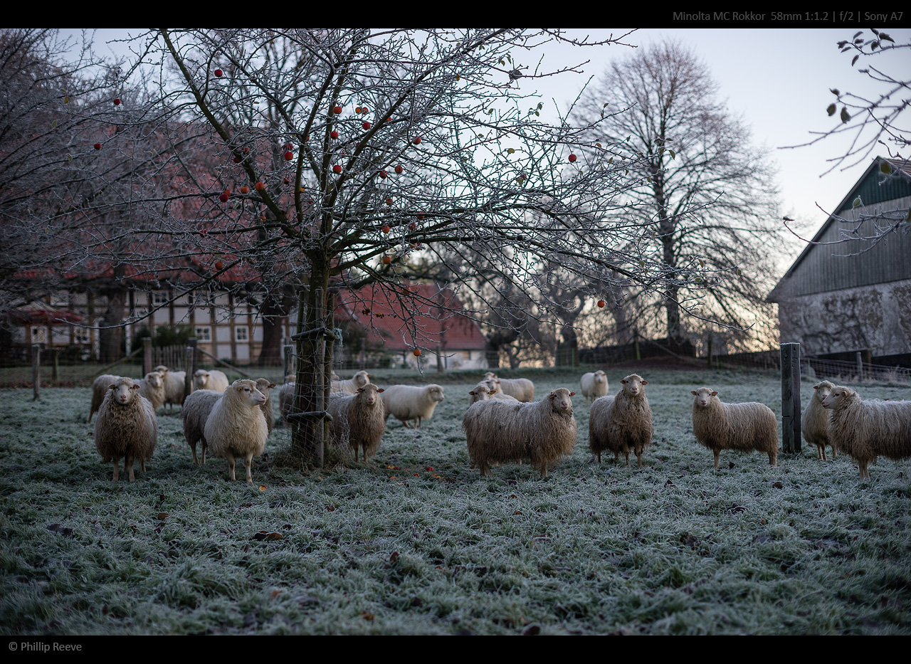 wintermorgen_2