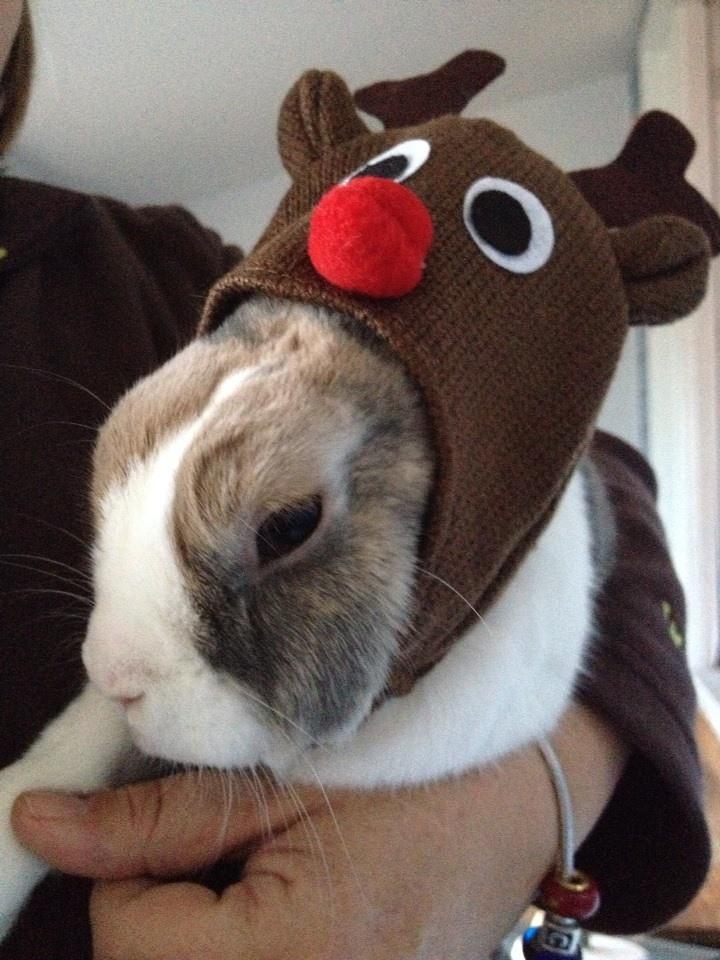 Noah is a reindeer