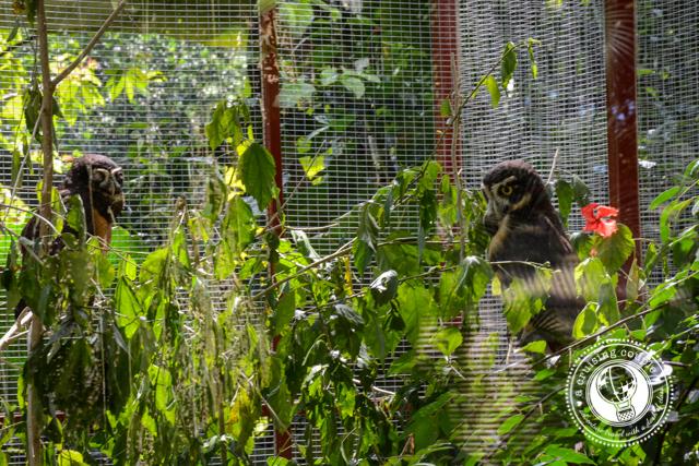 Owls Jaguar Rescue Center