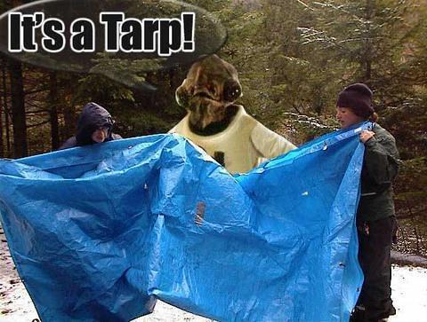 its-a-tarp-719413