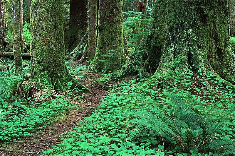 Carmanah Walbran Park, Carmanah Valley, West Coast Vancouver Island, British Columbia, Canada