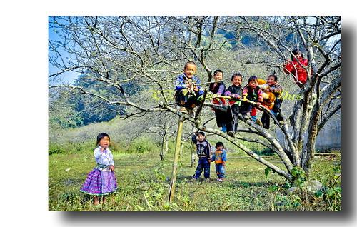 NỤ HOA VÙNG CAO (PHIÊNG CÀNH - MỘC CHÂU - SƠN LA) by KTS Nguyen Phu Duc