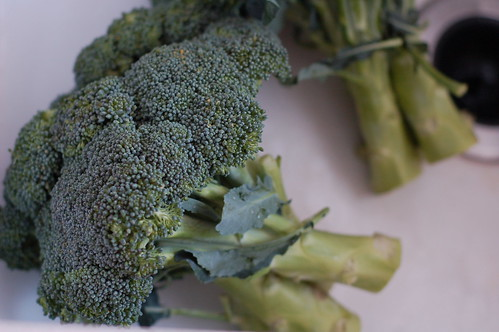 Organic broccoli by Eve Fox, the Garden of Eating blog, copyright 2014