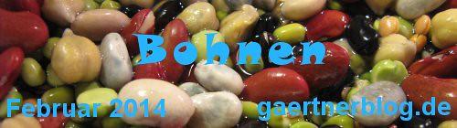 Garten-Koch-Event Februar 2014: Bohnen [28.02.2014]