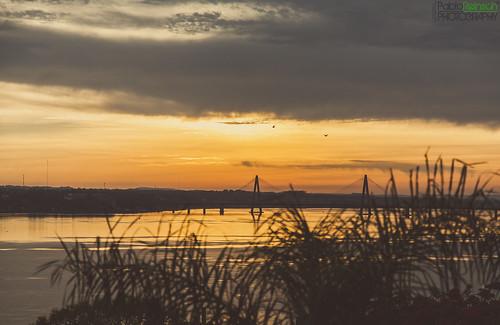 morning bridge sky plants bird water clouds digital sunrise canon river eos golden reflex silhouettes 5d parana encarnacion misiones posadas markii canoneos5dmarkii 5dmkii pabloreinschphotography