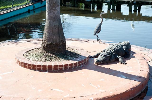 Gator3 (1 of 1)
