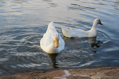 Water Fowl 9