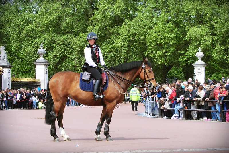 Police woman on police horse