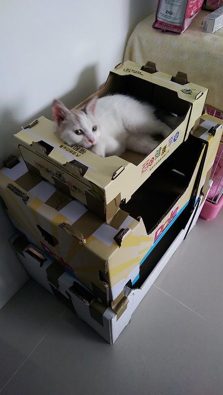 貓咪的三層公寓
