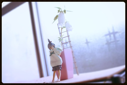 カメラロール-7558