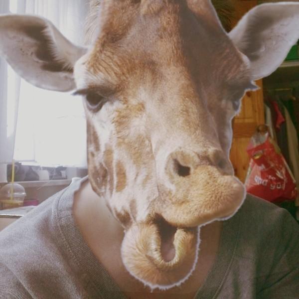 """130 / 365 """"hi, I'm a giraffe"""""""