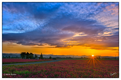 sunset crimson oregon portland or agriculture clover willamette sankar forestgrove redclover crimsonclover willamettevalley redfields cloverfield sankarraman msankar corlinius