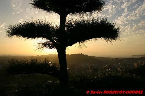sunset arbres shikoku matsuyama japonle