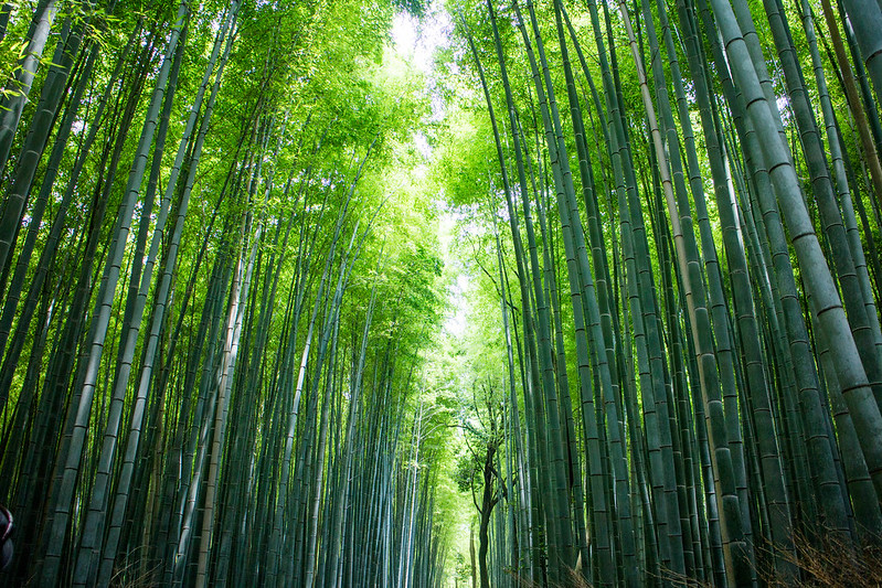 嵐山竹林The Path of Bamboo