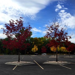 Love the colors! #beautahful #nature #tree #fall #utah