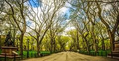 Walking through Central Park.