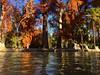 #autunno :fallen_leaf:  La mia stagione preferita dopo l'estate #relax #coloricaldi #Verona #terme #sunnyday #OrganizzazioneCarnioVerganiNonSbagliaUnColpo :arrow_top: