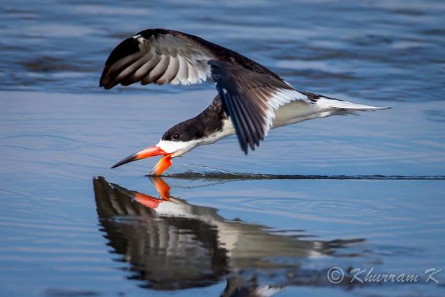 The art of skimming