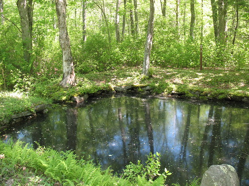 water forest ma outdoors pond massachusetts freetown stateforest freetownfallriverstateforest