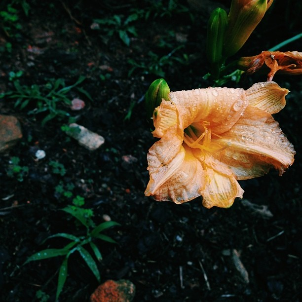 #flowerporn from my yard. #vscocam #vsophile