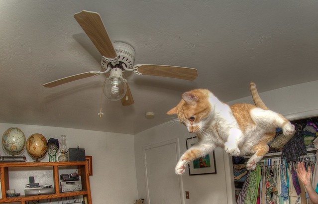 Bubby the Wonder Cat descends toward Reno