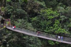 rolling stock(0.0), track(0.0), rainforest(1.0), suspension bridge(1.0), canopy walkway(1.0), forest(1.0), rope bridge(1.0), jungle(1.0), bridge(1.0),
