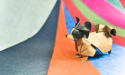 Papillon Dog - Hideo Komatsu