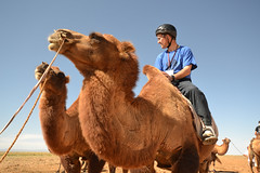 Photo of Person Riding a Camel