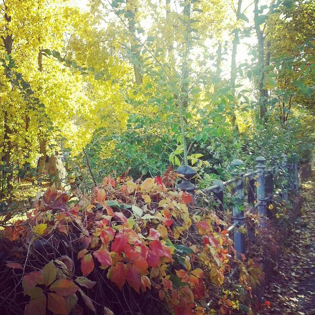 Herbst-Farbpalette  #Kreuzberg #Instagram  on Instagram ...