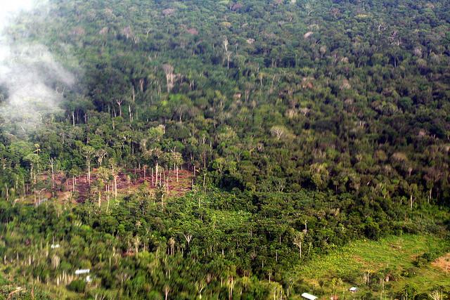 去森林化增加了瘧疾發生的機會。圖片作者:Brodie Ferguson,圖片來源:http://www.flickr.com/photos/38174517@N03/3516404043,本圖符合CC授權使用。
