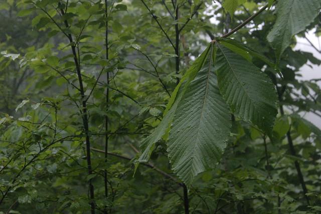 途中,雨に降られてしまったが,植物にとっては恵みの雨.