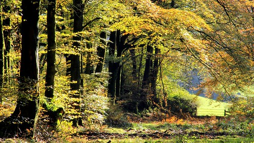 autumn trees leaves woodland woods somerset autumnal taunton quantocks aonb westbagborough quantockhills lydeardhill willsneck