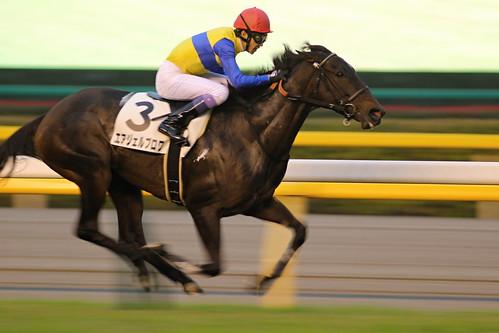 12R 勝ち馬 エアジェルブロワ(武豊) - 無料写真検索fotoq