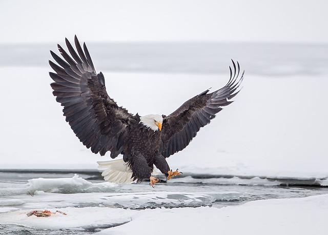 Decisive Moments of Bird Photography Gallery