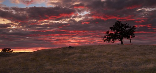 ernogy folsom landscape california ca clouds canon colors nature northerncalifornia oak oaktree silhouette sky sunrise sunset usa outdoors foothills canon7d
