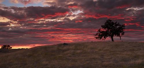 ernogy folsom landscape california ca clouds canon colors nature northerncalifornia oak oaktree silhouette sky sunrise sunset usa outdoors foothills canon7d