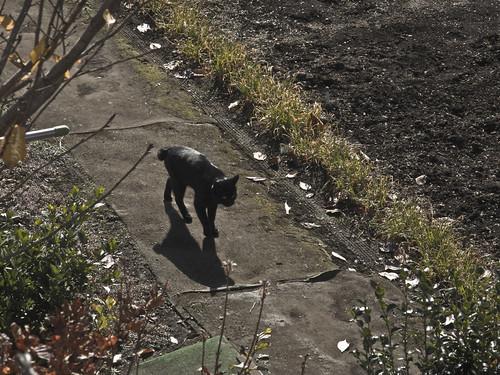 Cat_2013-11-29
