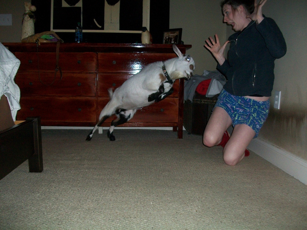 The perfectly timed terrifying goat picture: